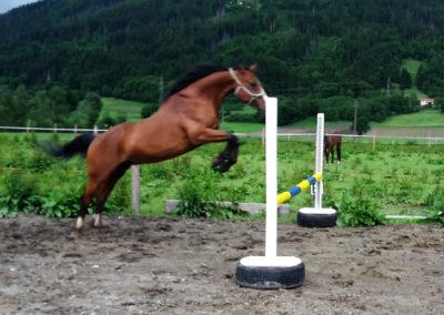Pferdetraining Kopie romy